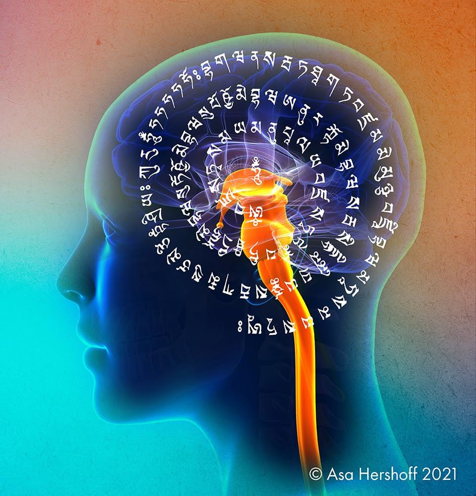 Female Spinal Cord Brain Anatomy - blue concept